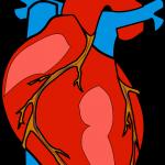 Ohranjaj visok krvni pritisk pod nadzorom z zdravo in raznoliko prehrano!